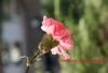 Цвете за осми март